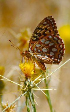 Nature photography, butterflies ✿⊱╮