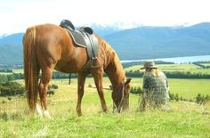 Ride over our Westrayfarm on a Horse Trek or Guided Quad Bike Ride and be greeted by our other friendly horses and farm animals. Horse trekking and quad bike rides on the trails of Te Anau, New Zealand. Come and ride with us at Westray Farm Horse Treks. We are located in the beautiful lakeside township of Te Anau nestled within the world renowned Fiordland World Heritage Park. Te Anau, Quad Bike, Bike Rides, Horse Farms, Cattle, Farm Animals, Trekking, New Zealand, Globe