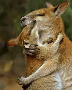 Animal pictures: sharing the love