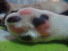 I love kitty paws