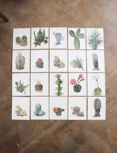 cactus botanical prints