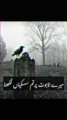 Trendy funny pics with captions in urdu ideas Soul Poetry, My Poetry, Funny Christmas Photos, Christmas Humor, Funny Pictures With Captions, Funny Pics, John Elia Poetry, Funny Couples Memes, Punjabi Poetry