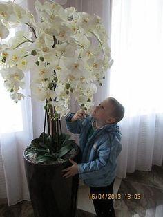 Best 12 Aprenda a cuidar de Phalaenopsis, clique na foto -------------------------------------------------------------------------- falenopsis phalaenopsis orquídea borboleta Orchid Flower Arrangements, Orchid Planters, Orchids Garden, Garden Plants, Indoor Plants, Indoor Garden, Exotic Flowers, Beautiful Flowers, White Flowers
