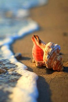 Beach photography using a shell by the ocean water Beach Bum, Ocean Beach, Shell Beach, Summer Beach, Ocean Sunset, I Love The Beach, Ocean Photography, Photography Awards, Photography Projects