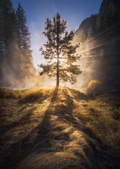 ~~The Valley of Light | incredible crepuscular light rays create a tree of light, Yosemite National Park, California | by Michael Shainblum~~