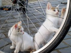 Kittens on Bicycles