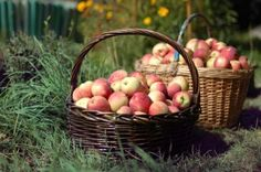Kosz z jabłkami