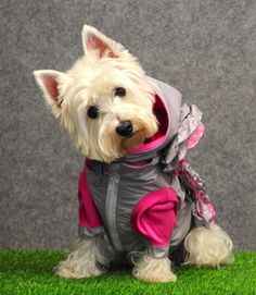 Silver rain jacket with flowers for girl dog by CiuCiuDogClothes
