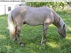 Another true silver grullo.  Would be great to have this kind of silver expression in AQHA!