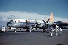 """TAA Lockheed L188A (VH-TLA) """"John Eyre"""" at Essendon 1961. Australian Airlines, Domestic Airlines, Air New Zealand, Flaxseed, Aeroplanes, The Past, Aircraft, Future, History"""