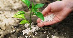 A szuperfoszfátot mindenkinek érdemes megismerni, ugyanis csodákra képes a kertben, a növényeket szinte újjávarázsolja, nézzük, miért kellene használnod neked is!