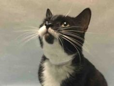 ****** AVERAGE RATED JOJO DUMPED BECAUSE OWNER DIDN'T FIND HOUSING THAT ALLOWED CATS! Just 3 years old and NEUTERED JO JO is already facing death thanks to an inconsiderate owner not finding a home that would allow pets! He gets along with kids 13 and up. Never been socialized around cats or dogs! Make JO JO a permanent part of your family, or at least FOSTER until someone comes along who can!