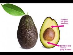 Read This And Never Throw An Avocado Seed Again