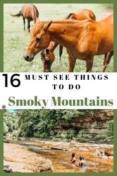 Smoky Mountains Tennessee: Plan your next trip to Pigeon Forge TN and be sure to visit The Island in Pigeon Forge. Tennessee offers many local attractions and business for you to exploreGatlinburg ten Gatlinburg Tennessee Cabins, Gatlinburg Vacation, Tennessee Vacation, Vacation Trips, Nashville Tennessee, Vacation Spots, Family Vacations, Vacation Ideas, Smoky Mountains Tennessee