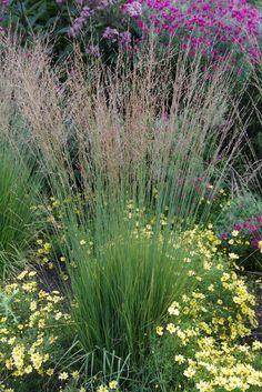 Ornamental Grasses an Exceptional Addition to any Garden Dry Garden, Garden Shrubs, Lawn And Garden, Garden Plants, Garden Landscaping, Perennial Grasses, Ornamental Grasses, Perennials, Provence Garden