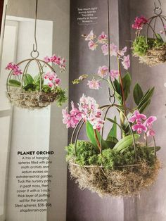 Orchids and sedum in spherical planters from Terrain
