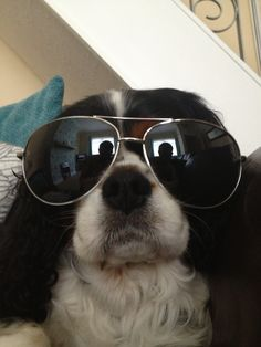 Cool dog! #sunglasses