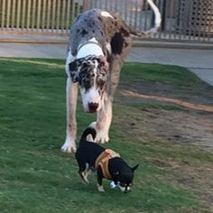 Contestants: Finley and Taquito #BilJac #puppies