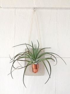 Copper + Cement Air Plant Holder | Air Plant Wall Hanging | Wall Decor | Planter…