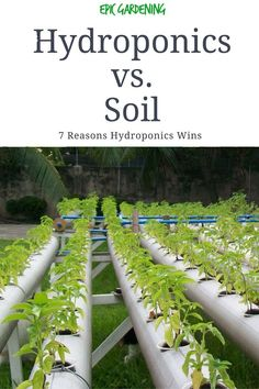 """Learn the 7 reasons that the """"hydroponics vs soil"""" battle is won handily by hydroponics. After reading this, you won't want to use soil ever again! Hydroponic Farming, Hydroponic Growing, Hydroponics System, Hydroponic Gardening, Aquaponics Fish, Hydroponic Solution, Indoor Vegetable Gardening, Organic Gardening Tips, Urban Gardening"""