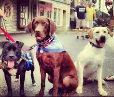 Things to do with your dog in the Smokies: Walk Downtown Gatlinburg with your Dogs