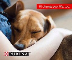 Its Change a Pets Life Day. Sounds like a perfect day to adopt. #PurinaPartner . . . . . @purina #purina #betterwithpets #love #dog #dogs #cat #cats #florida #broward #miami #southflorida #adopt #rescue #adoptdontshop #pet #ilovemypet #nonprofit #charity #rescueme #adoptme #cute #cutie