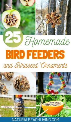 The Best Homemade Bird Feeders and Birdseed Ornaments - The Ultimate Guide - Natural Beach Living Outdoor Activities For Kids, Fun Crafts For Kids, Diy For Kids, Bird Feeders For Kids To Make, Bird Seed Ornaments, Homemade Bird Feeders, Bird Theme, Bird Crafts, Backyard Birds