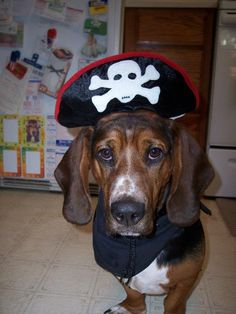 Aarrrggghhh! OMG!!! I need this for my Brody...