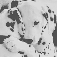 """""""Και τα σκυλιά,🐶 το βράδυ, κοιτάζουν δακρυσμένα προς τα εκεί που είμαστε κάποτε παιδιά."""" Τάσος Λειβαδίτης #TasosLeivaditis"""