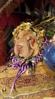 Lulu the fortune teller - homemade dog costume