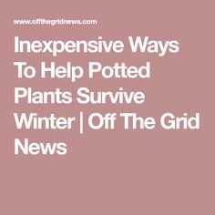 Inexpensive Ways To Help Potted Plants Survive Winter | Off The Grid News