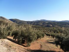 Andalucia Explorer: Monday Morning Photo - Autumn Sunshine in the Sier...