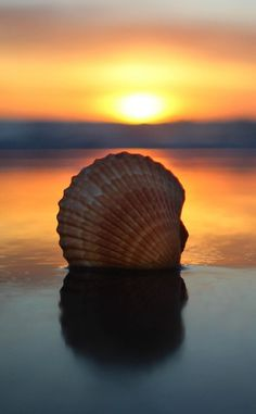 Seashell on the seashore