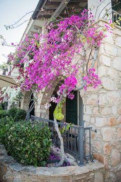 Columbia Beach Ressort – welcome to paradise, cyprus, columbia Beach Resort Columbia, New Farm, Cyprus, Beach Resorts, Travel Around, Sidewalk, Outdoor Structures, Island, Plants
