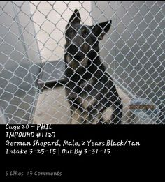 URGENT! Animals are being killed in Roswell, NM due to time not space. They are given 7 days, killed on the 8th day. NEED RESCUE ASAP PLEASE HELP!! 2-year-old Shepherd male Phil is due out TOMORROW 3-31. He has to be out of the building first thing Wednesday morning (4-01) or they will not hesitate to kill him. Cage #20 | Impound #1127 **Please comment via main thread bcuz comments here may not be seen. TY** No. 575-624-6722 Roswell Animal Control 705 E. McGaffey, Roswell, NM 88201 MAIN PAGE…