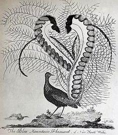 Related image Bird Design, Types Of Art, Birds, Tattoo, Animals, Image, Art Types, Animaux, Bird
