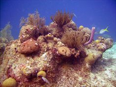 Scuba Diving in Bonaire and Curacao - http://thebesttravelplaces.com/scuba-diving-bonaire-curacao/