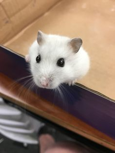 Jackie the Hamster