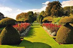 Hinton Ampner gardens Alresford, Hampshire photograph picture print by AE Photo