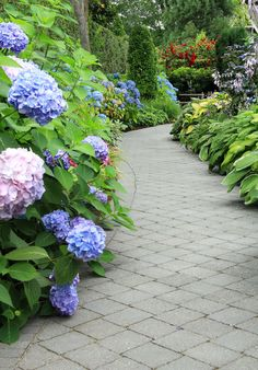 shade garden Dreaming of a gorgeous garden path Plan it to perfection so that you can bring your garden path to life with these five simple steps. Hydrangea Landscaping, Shade Landscaping, Hydrangea Garden, Shade Garden Plants, Cottage Garden Plants, Garden Entrance, Shade Perennials, Garden Landscape Design, Plantation