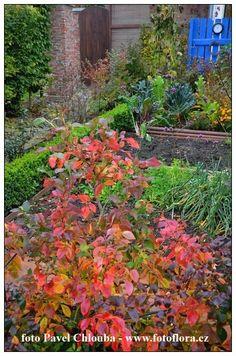 Sledujte také náš druhý zahradnický blog www.zahradniknacestach.blogspot.com V posledních dnech jsem dostal několik dotazů ohledem p... Plants, Blog, Blogging, Plant, Planets