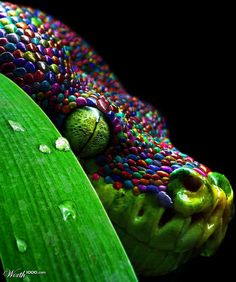 Shy Snake - Worth1000 Contests