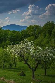 Spring oasis by Cristian Sirbu on 500px