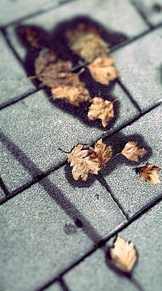 Foglie d'autunno. #mobilephotography #autumn #leafs #autunno