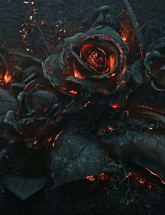 Death of a Rose: