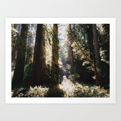 Collect your choice of gallery quality Giclée, or fine art prints custom trimmed by hand in a variety of sizes with a white border for framing. Fine Art Prints, Tapestry, Gallery, Frame, Wall, Plants, Outdoor, Home Decor, Hanging Tapestry