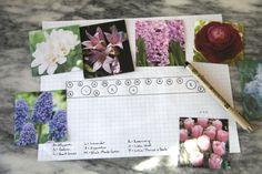 Spring Bulbs Planning Chart for Beginning Gardening, Gardenista