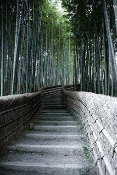 Bamboo forest at Arashiyama, Kyoto, Japan 嵐山 京都