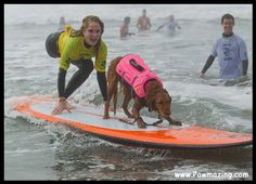 Ricochet, not able to be a service dog because he likes chasing birds, became a surfice dog, surfing with special needs children and people with diabilities.
