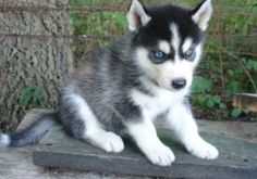 One day he'll be mine and I shall name him Michigan